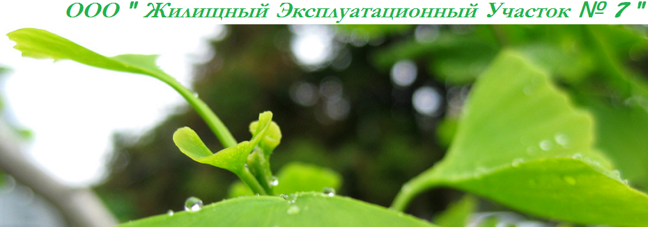 """ООО """"Жилищно Эксплуатационный Участок  № 7"""""""
